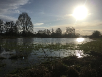 View across flooded field