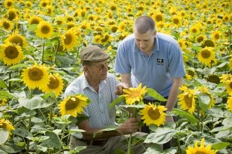 Nicholas Watts and Paul Wilkinson in a sunflower field at Vine House farm