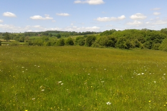 View across meadow with hedgerow in background