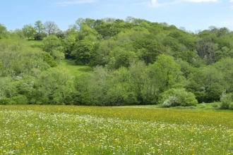 Wildflower Meadow with wooded slope behind