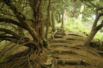Path through yew trees