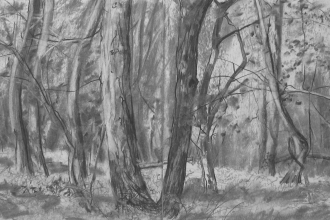 Charcoal drawing of woodland
