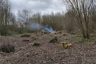 A woodland clearing with coppiced stools and bonfire smoke