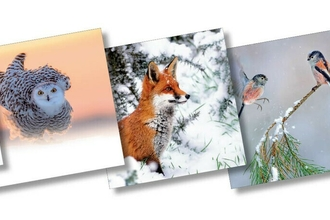 Five Christmas card covers featuring wildlife images