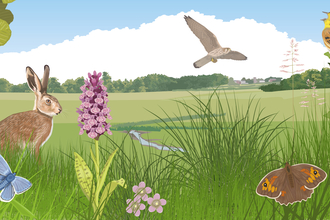 Illustration of a meadow with wildlife