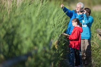 Family birdwatching in reedbeds