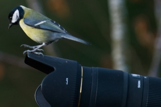 Great tit perched on large camera