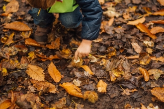 child picking up sweet chestnuts among autumn leaves