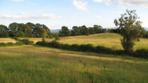 View over meadows bordered by hedges