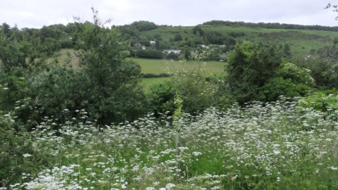 View through cow parsley to hills beyond