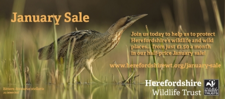 Photo of Bittern behind January Sale promotional text