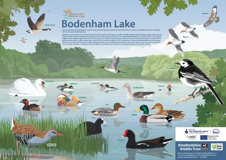 Species ID board: Bodenham Lake 2