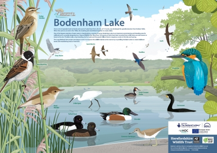 Species ID board: Bodenham Lake