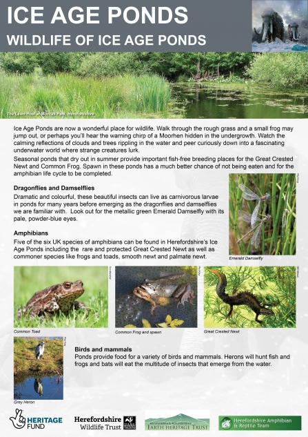 Wildlife of Ice Age Ponds Interpretation Panel