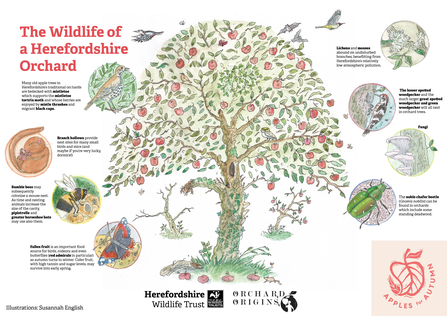 Illustration of an apple tree with small illustrations of wildlife species around it.
