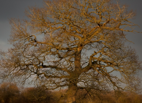 Portrait of a tree at Sturts Nature Reserve